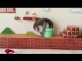 Mario-hamster. Короткие видео приколы.