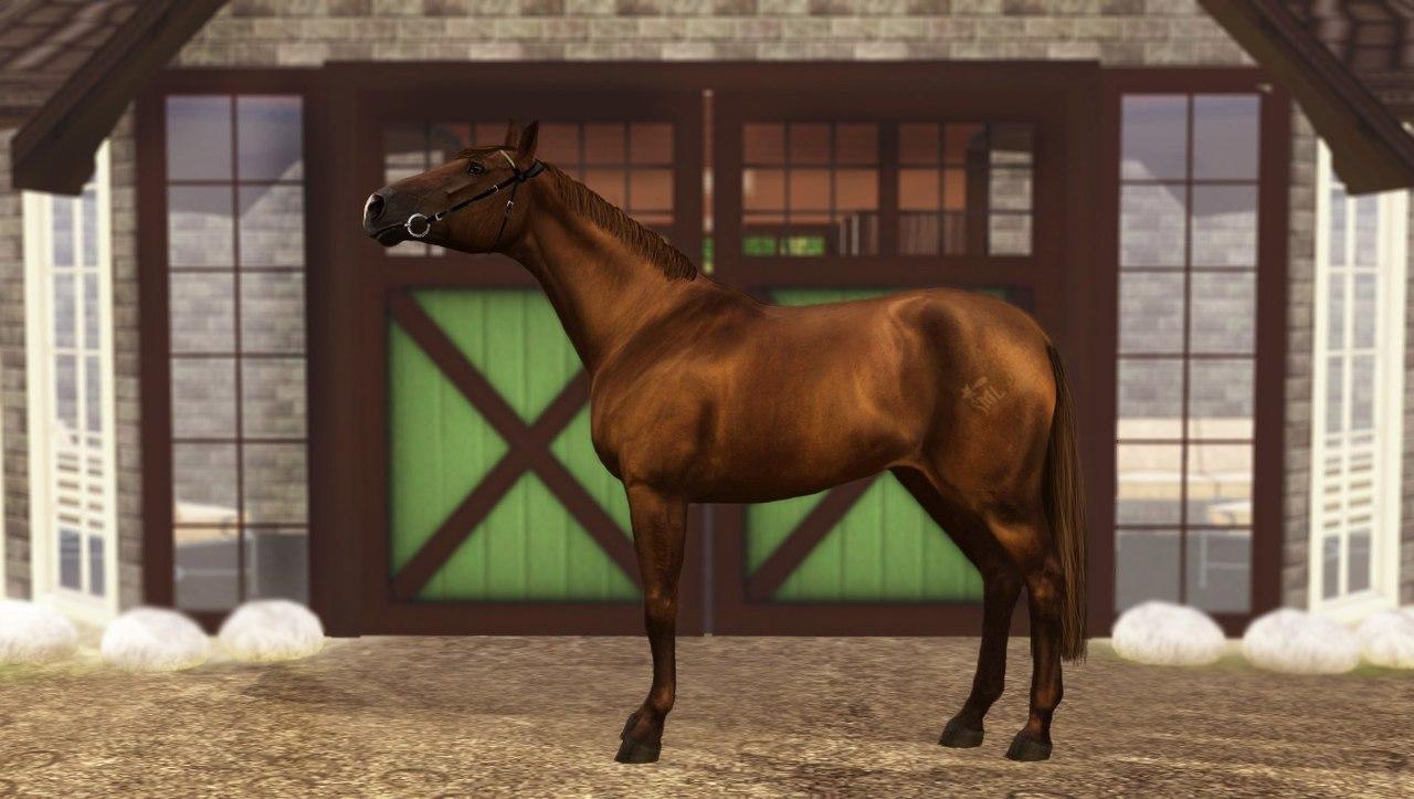 Регистрация лошадей в RHF 2 1WzbXpGWcT8