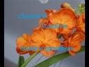 Орхидея Ванда. Полив и удобрение.