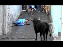 Toiros e Confusão - Best OF 2016 - Clip Nº 2 - Ilha Terceira - Azores Crazy Fails