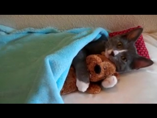 Видео, которое заставит Вас уыбнуться. Кот обнимает плюшевого мишку