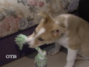 Счастливая судьба собаки Дины