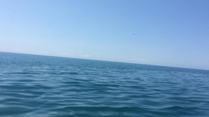 В погони за дельфинами