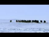 BBC Планета Земля 6. Ледяные миры - Planet Earth 6. Ice Worlds (2006)