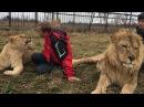 Разговоры по душам со львицей Челябинская львица Лола Сафари парк львов Тайган
