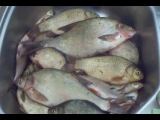 Рыбалка № 56 НА ДОННУЮ СНАСТЬ ЛЕЩ КАРАСЬ ПЛОТВА