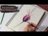 Как нарисовать цветы акварелью - Мак