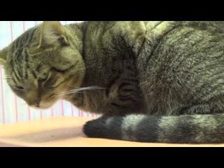 Вирусный лейкоз кошек Смертельный приговор/The virus leukemia cats a death sentence