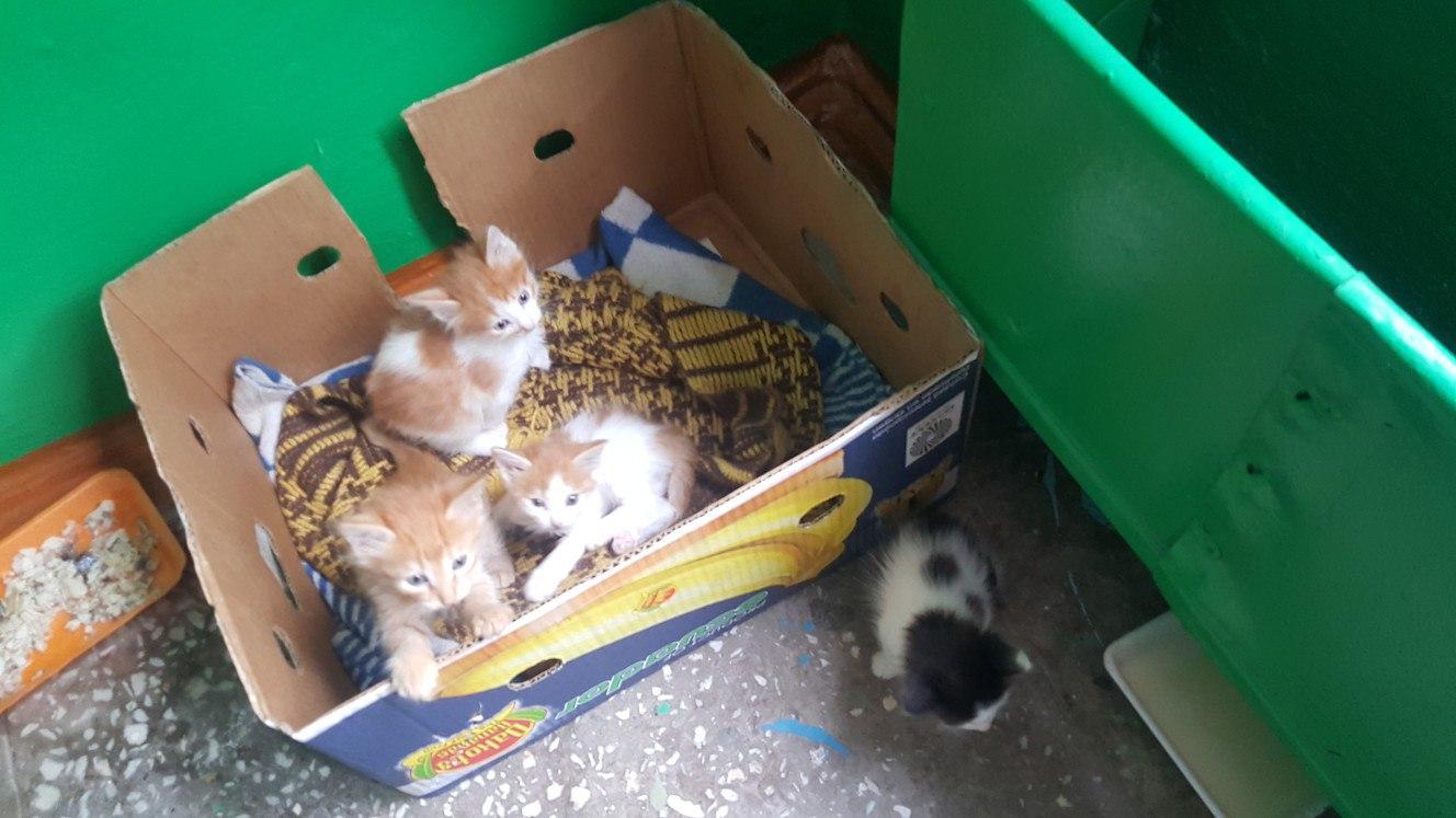 Кто хочет себе рыженьких и черненького чудесных котяток?