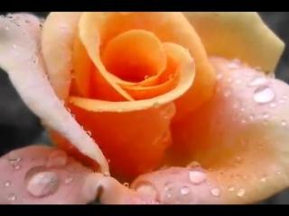 ♥ Ещё раз о розе