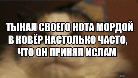 _Ck3urlCB_Y.jpg