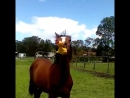 Horse and guck
