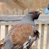 Птицеблоги