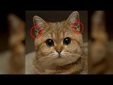 Замечал ли ты когда нибудь на ушах у кошки эти кармашки? Они выполняют очень важн...