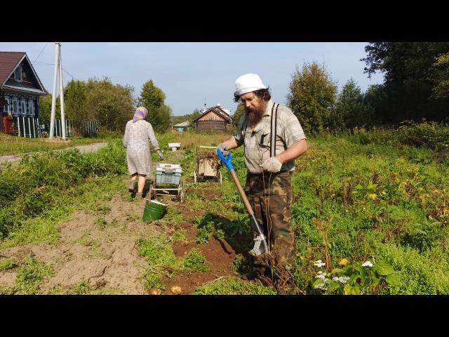 О помощи ангелов соседям на уборке картошки