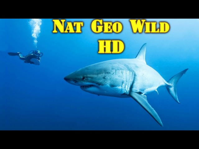 Таинственный Остров акул. Хищный Подводный мир