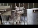 Лечим котенка после панлейкопении Подозрение на коронавирус Срочно нужна финан...