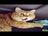 Самое смешное видео об испуганных кошках
