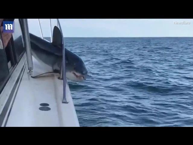 Sharky Stuck