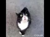 Озвучка фильма Бетмен Приколы с котами. Видео коты Смешные коты и кошки