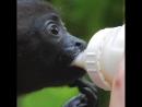 Служба спасения диких животных в Коста-Рике