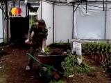 Дачные истории о-чесноке,защите малины и старого яблочного сада; и о др..mp4