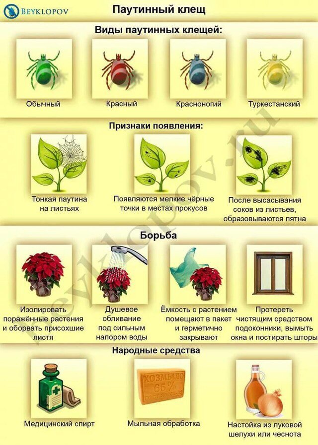 вредители комнатных растений OVkRWEMl2jk