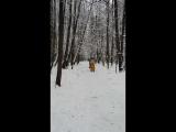 Лыжню! Уступите парню, лыжню, Скорей!