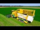 Parsley Harvesting   Ploeger MKC-2TR container mower   Peterselie maaien loonbedrijf Maverko