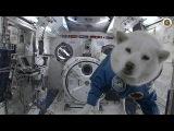 Spherical dog in vacuum