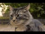 Кот строит странные лица