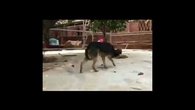Спасение собак волонтерами международного фонда