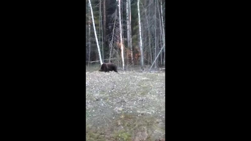 Медведи. 2 км не доезжая до Брин-наволока.