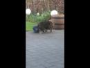 Мишки, кошки