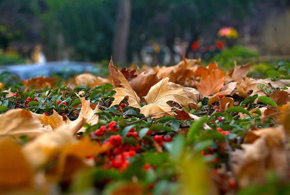 Фотоподборка №36. Уютная осень: 20 бесплатных фотографий