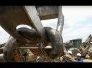 Incredible 10m giant anaconda snake caught in Brazil