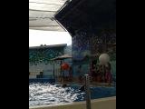 alka_0609 video