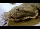 Анаконда Королева змей Супер хищник Загадочное существо Документальный фильм