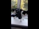 Коту вообще насрать