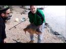 Рыбак упустил рыбу видео Гигантский карп воскрес в руках рыбака и улизнул в во...