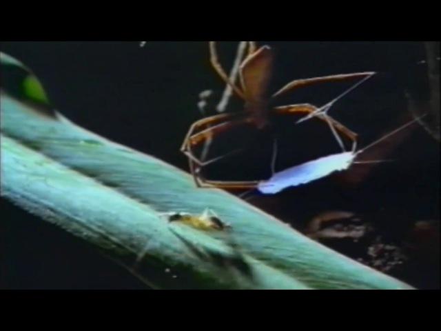 Örümcek Ağı (Dünyanın En sağlam Materyali)