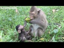 Super young mother monkey with her baby monkey eating fruit