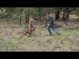 Мужчина подрался с кенгуру - полная версия