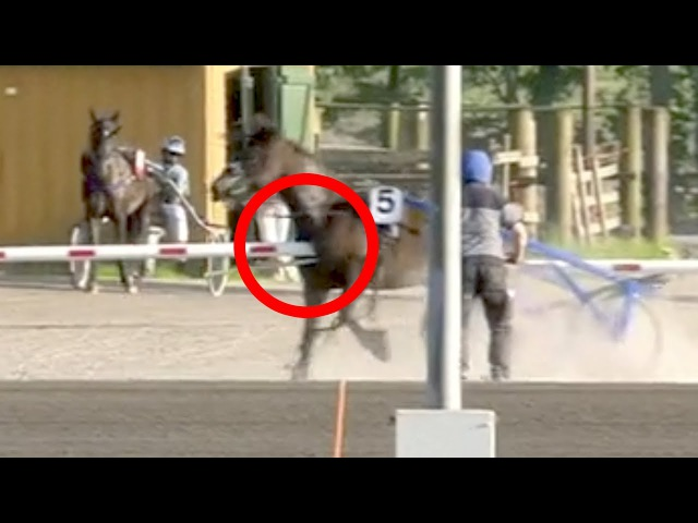 Distressed racehorse impales itself on boom gate