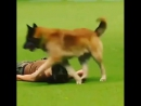 Умная собачка