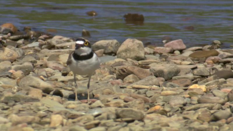 BBC. Тайная жизнь птиц / Создание гнезда (2010) BDRip 720p