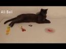 Кошка играет с любимой игрушкой