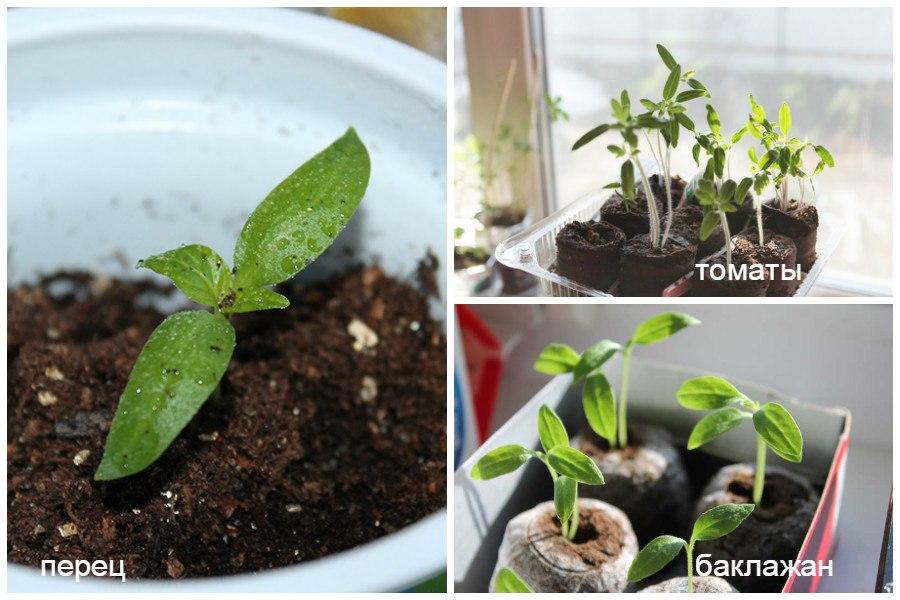 Сроки посадки рассады - как определить, когда сажать семена на рассаду