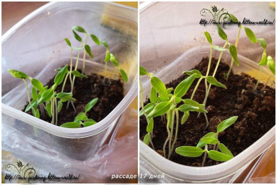Как вырастить помидоры, самый простой способ
