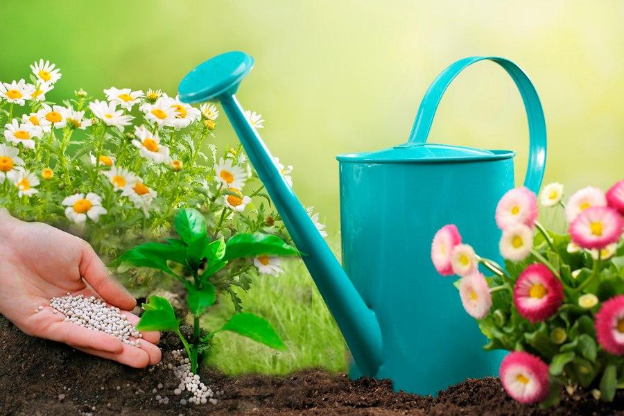 Подкормка растений, стимуляторы роста